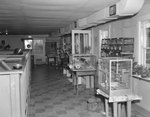 Inside of Stroop's Snake Farm, view of cages with birds and other animals. Bowmans Crossing, Va. by William Garber