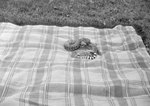 Snake on a blanket outside. Stroop's Snake Farm. Bowmans Crossing, Va. by William Garber