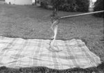 Snake being handles over a blanket outside. Stroop's Snake Farm. Bowmans Crossing, Va. by William Garber
