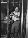 Inside of Stroop's Snake Farm, a man handling a snake inside of its cage. Bowmans Crossing, Va. by William Garber