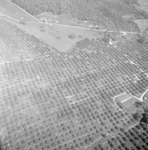 Overhead view of a possible tree farm