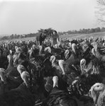 Two women standing among a large group of turkeys, with a field and farmhouses in the background.