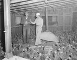 Two men standing inside of a poultry house, inspecting a chicken.