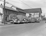 A row of company trucks for Triplett and Vehrencamp, a farming and hardware store. View without the drivers