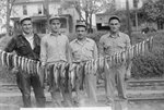 """Closer view of four men standing behind a long string of fish that is tied to two trees, and a sign that says: """"Blair, 18"""" 1-14 (and) 17.5 1-12; Max, 16.5-1-5.5; Calvin, 18""""-1-14; Paul, 18"""" 2-3.5 (and) 18"""" 1-15.5. Big Stoney Creek. 1948."""""""