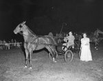 Broadway Horse Show, a man riding in a horse-drawn carriage, with spectators in the background