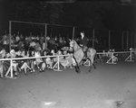 Broadway Horse Show, a woman riding a horse along a line of spectators