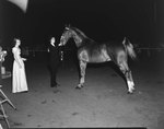 Broadway Horse Show, side view of a woman approaching a horse