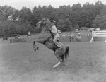 Side view of a man riding a horse that is standing on its hind legs
