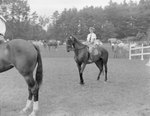 A young woman posing on her horse, with the rear end of another horse in the foreground