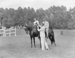 A man and a woman riding on two separate horses, with another man attaching ribbons on each horse