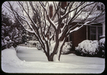 Big Snow (Red Maple and side yard scene)