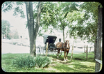 A Mennonite buggy in Harrisonburg by James Madison University