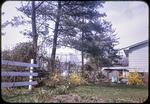 Inco [sic] trees along fence by James Madison University