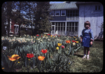 Laura and the tulips, narcissus by James Madison University